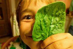 Porque hay vida más allá de las croquetas… – FoodieKids Revolution