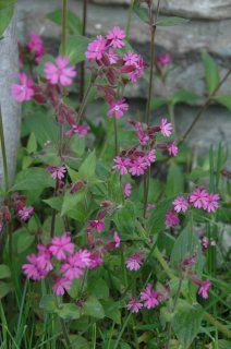 blomster Søstu Hogstad