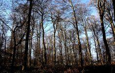 Einmal die Woche blauer Himmel, ... Anfang Januar, ist doch nicht zu viel verlangt, oder? Wobei zwei oder drei mal noch besser wäre. Auch für Waldspaziergänge. :-)