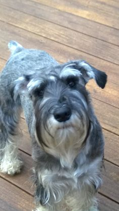 My dog Lacee