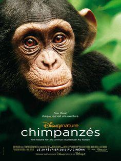 Chimpanzés, le nouveau film Disneynature au cinéma le 20 février 2013 © Disney #CHIMPANZES