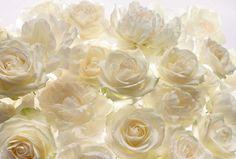 Fototapeta ścienna róże XXL4-007 Komar