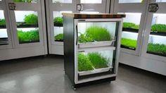 Indoor Garden Systems Indoor vegetable garden system google search indoor garden urban cultivator verduras frescas cultivadas en tu casa veoverde workwithnaturefo