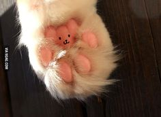 I will never look at a cat's paws the same