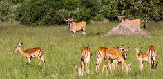Tourist Information, Uganda, Gain, Safari, National Parks, Wildlife, Knowledge, Passion, Tours