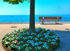 #Repost @samuraijack95  #bardolino #lungolago #italiainunoscatto #garda #lago #verona #italy #italia #lagodigarda #lakegarda #lake #veneto #gardalake #ig_italia #instagramitalia #volgoitalia #ig_italy #lakelife #blue #water #landscape #panorama #paesaggio #gardasee #see #nature #tree #volgoverona