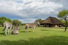 Mongena Private Game Lodge | Specials 4 Africa