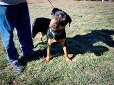 Jackson http://www.pchsva.org/forms/adoptionapplication.html