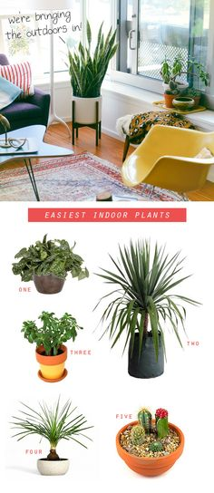 Bringing the outdoors in; why you should bring plants inside the home, the top 5 easiest plants to care for and how to care for them. i need more plants in this house!