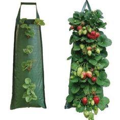 hanging strawberry