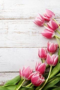 Pin By Mimmi Penguin 2 On Pink Tulips Floral Wallpaper Nature