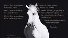 Horse Poems, Horse Treats, Finding Peace, Horses, Animals, Life, Image, Animales, Animaux