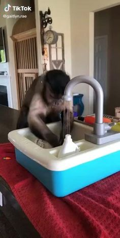 Watch this video to see how smart this monkey is. #tshirtstore/#tshirtslovers/#tshirtswag/#tshirtoftheday/#tshirtlife/#tshirtcollection/#tshirts/#tshirtshop/ #tshirtsonline/ #tshirtprinting/#tshirtshop/#tshirtslovers/#tshirtoftheday/#tshirtlovers/#tshirtstore/ Cute Little Animals, Cute Funny Animals, Funny Cute, Cute Cats, Cute Animal Videos, Funny Animal Pictures, Cute Monkey, Funny Vid, Cool Pets