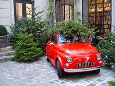 Christmas tree shopping in Paris