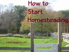 A New (England) Life: How To Start Homesteading