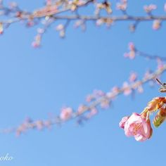 【paikii17】さんのInstagramをピンしています。 《ほとんど蕾でしたが・・・ * この暖かさで咲いてしまった…という感じ * * 空も綺麗でした * * #sakura#myheartinshots#ip_connect#insta_pick_blossom#splendid_flowers#symply_flowers#favv_flowers#my_daily_flower#igscflowers#ig_myshot#loves_nippon#loves_flowers_#loves_garden#flowerstalking#tv_flowers#airy_pics#petal_perfection#ファインダー越しの私の世界#桜#花フレンド#はなまっぷ#代々木公園#lumix#20mm#単焦点#ip_blossoms》