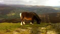 Pony on Sugar Loaf mountain, Wales, UK Wales Uk, South Wales, Brecon Beacons, Cymru, Time Out, Welsh, Tea Time, Pony, Barn