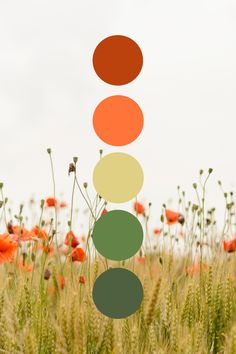Nature color palette to help with branding colors and ideas. #branding #colorpalette #brandingdesign #contentcreation #businessbranding #brand #businessgrowth #businesstips #nature #naturecolor #inspiredbynature