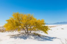 Tularosa Basin, White Sands National Monument, New Mexico. Photo by Cody Howard.