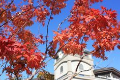 2012 Autumn of Alpensia Resort in Korea