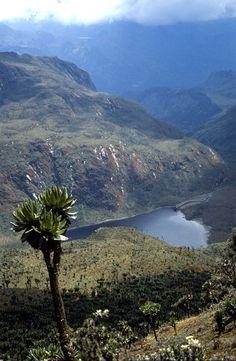 Ruwenzori Nationalpark, Uganda