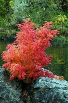 Glorious fall color