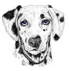 A selection of pet illustrations - technical pen & acrylic ink