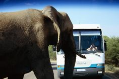 Elephant on road near safari bus. Safari Bus, Places To Travel, Places To Go, Game Reserve, Number Two, African Safari, Africa Travel, Lonely Planet, Continents