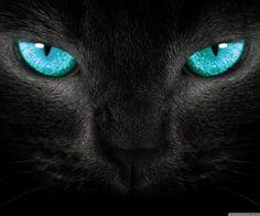 Gatito negro con ojos azules