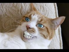 The happiest cat in the world :)