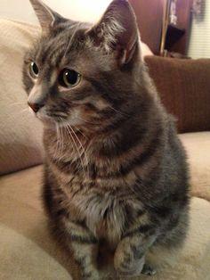 Matilda Cat | Pawshake