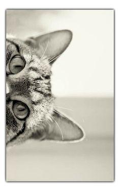 cat-grey-w-frame