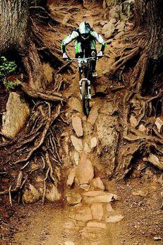 Entre las raices y las piedras