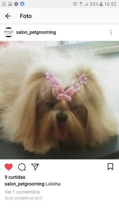 Dog Grooming Styles, Dog Grooming Tips, Animals And Pets, Cute Animals, Creative Grooming, Cute Cuts, Shih Tzus, Puppy Pictures, Pet Shop
