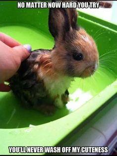 Wet bunny.