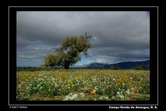 Nubes, árbol y flores | por Sphenodiscus