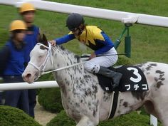 Race Horses, Horse Racing, The Great Race, Donkeys, Thoroughbred, Beautiful Horses, Color Patterns, Pony, Marble