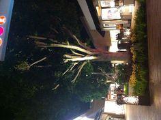 Gorgeous uplit trees, holiday greenery & new ironwork around lighting #WestfieldUTC