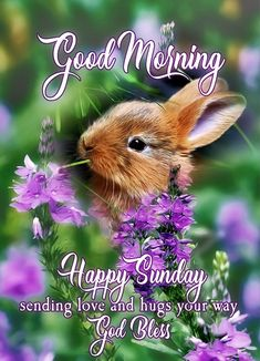 Good Morning Happy Sunday, Good Morning Friends, Mornings, Blessings, Encouragement, Blessed, God, Night, Quotes
