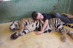 See 1193 photos from 4770 visitors about big tiger, spacious, and pets. Big Tiger, Wild Things, Phuket, Thailand, Activities, Pets, Animals, Big Cats, Tigers