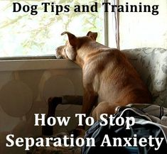 Dog tips and training How To Stop Separation Anxiety Dog Training Cute puppy Dog Whisper Dog memes Dog Tips Dog Commands Training, Dog Training Classes, Training Your Puppy, Dog Training Tips, Potty Training, Puppy Classes, Training Courses, Leash Training, Training Schedule