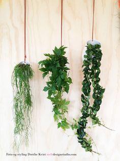 Hængeplanter Foto og styling Dorthe Kvist Meltdesignstudio 3