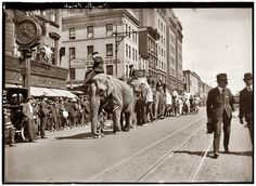 New York City - This photo shows the Elephant parade as the circus comes to NY. Old Circus, Big Top Circus, Circus Acts, Circus Clown, Night Circus, Elephant Walk, Elephant Parade, Vintage Circus Photos, Vintage Photographs