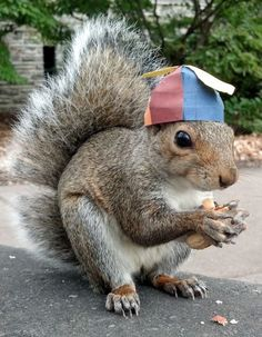 Nerd propeller beanie squirrelly: | Meet Sneezy, The Penn State Squirrel Who Loves Wearing Hats