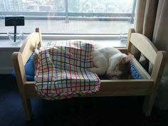 Animals are completely adorable when they're sleeping.