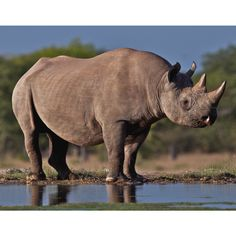 Here's to our favourite prehistoric-looking mammal! 🦏. Happy Rhino Day!