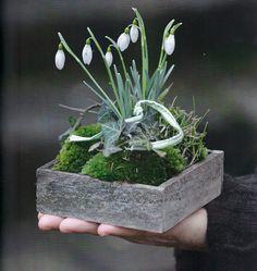 Schneeglöckchen Moos Efeu via La Pouyette. Deco Floral, Arte Floral, Pot Plante, Bouquet, Moss Garden, Spring Bulbs, Ikebana, Spring Flowers, Houseplants