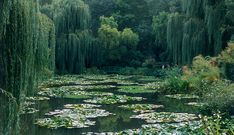 Monet built his own world through ponds, lilies, and overgrown wisteria, now fully restored to its early twentieth century glory.  Claude Monet's Garden, Giverny, France - Photo by Tony Souter © Dorling Kindersley