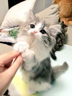 cute kitten...    cute kitten  Source by catsincare 			 			 - http://newsyork.gq/cute-kitten/