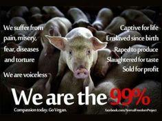 Veganism is saying that's not okay